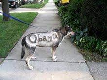 Skip the Obama Dog