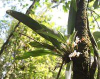 Flower on tree